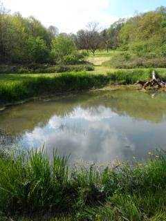 The lake in the lower meadow