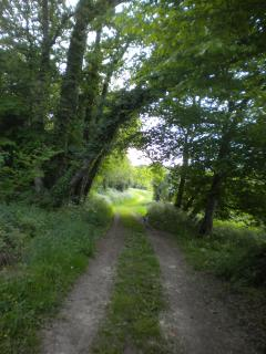 The green lane runs alongside our property, across the fields & up through the woods.