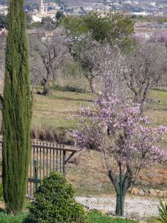 Looking towards Jalon in spring - almond blossom everywhere