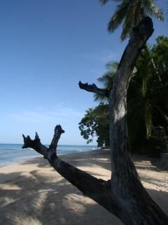 The white sand and tropical sea at Camden Nook, Barbados