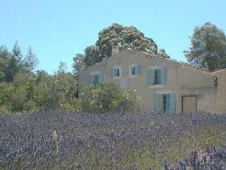 House directly at the lavender field