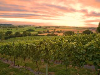 Higher Plot Vineyard Barn Langport  Somerset