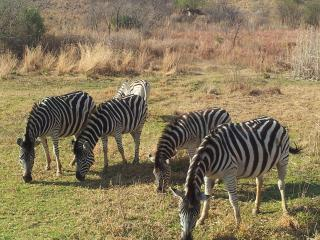 South Africa  Gauteng  Pretoria near game farms .