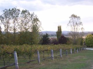 House in the vineyards, Mudgee