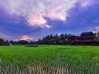 Nice 2 bedroom apartment for rent, rice field view, Celuk