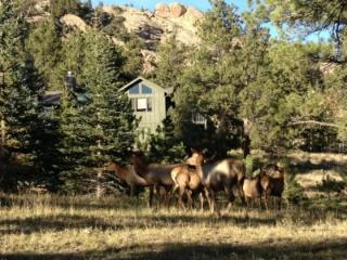 Secluded 4BR Rocky Mountain Home on 2.6 Acres, Estes Park