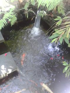 Koi Pond between Main House and Guest House