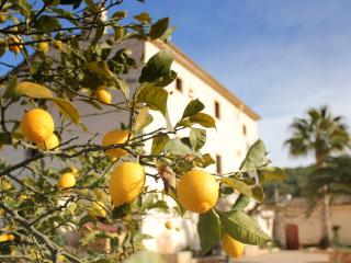 Beautiful villa with pool, olive groves,grapevines, Castellet i la Gornal