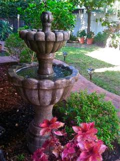 Our Italian fountain & bougainvillea are a hit with the hummingbirds
