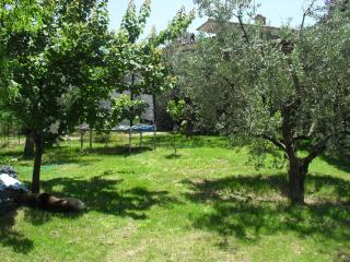 Beautiful villa surrounded by olive groves, Torri in Sabina