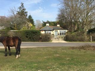 Pretty 3 bed cottage, directly onto the New Forest, New Forest National Park