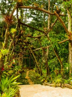 walkway of bromiliads