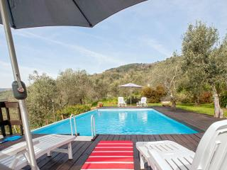 Charming villa surrounded by olive groves, Lucca