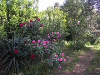 Spacious apartment in secluded countryside, Lodève