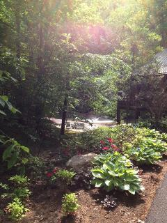 Summer Comes to Woodland Oasis