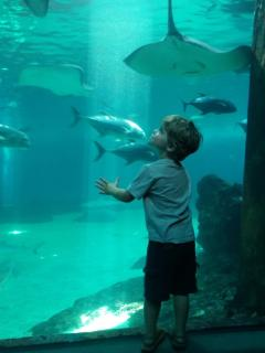 Maui Ocean Center at Ma'alaea Harbor is a favorite for kids of all ages