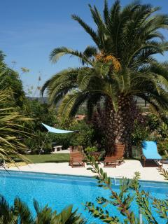 the pool, gardens, palm trees and BBQ.