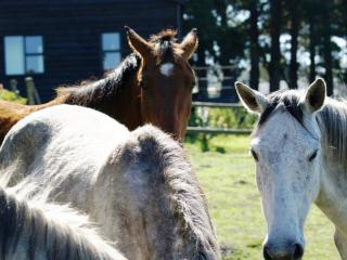 Free-roaming horses, Merlin's Cottage