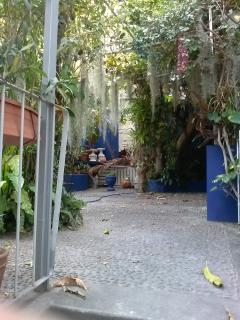 Courtyard garden, complete with Spanish Moss air plants