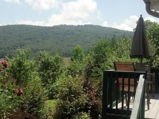 Mountain Views a 17'Swim Spa, pet friendly, and Wi, Hendersonville