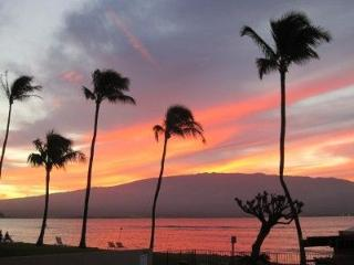 Spectacular Direct Oceanfront 60 ft to the water, Maalaea