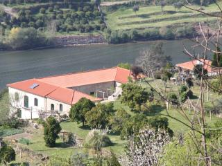 Vineyard in the Douro valley, Espadanedo