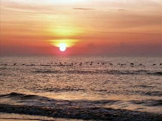 2 BR Direct Oceanfront-a Great Place to Stay!, Hilton Head