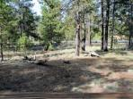 Great Sunriver Home with Hot Tub and in Wooded Setting Near Bike Paths