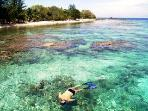 snorkeling the reef in front of the Pineapple House