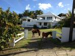 Bravos House Vieques Waterview Villa with Pool