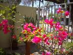 Bonsai Bougainvillea add flashes of color to feel the be