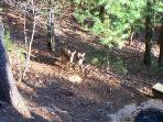 Watch the Deer As You Enjoy the Fire Pit on this no hunt/no shoot mountain.  Wildlife abounds!