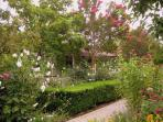 Cottage - surrounded by flowers, trees & vineyards