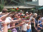 Free entry to lorikeet feeding at the Sanctuary morning and evening daily