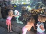 Walk 5 minutes to the Maui Ocean Center for hours of fascination with fish