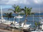 the nearby Small Boat Harbor has cruises  -- snorkel, sunset, dinner, whale, sport fishing
