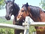 Our beautiful horses Cherie and Black Jack