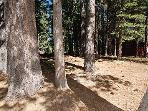 Natural Forested Lot