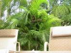 Relax at Casa\'s tropical poolside