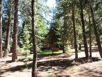 In the yard, looking toward the house--now you see why it's called Peaceful Pines