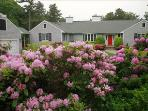 Osterville Vacation Rental (96974)