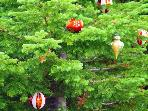 Summer and winter you will see greenery with festive decorations. Watch for these trees as you ride the lifts!