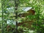 Wooded View of Mountain Laurel Cabin