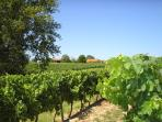 Surrounded by Vineyards
