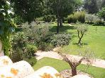 Garden View from Balcony