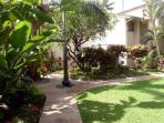 Courtyard area; turn left at the palm tree in the sidewalk and you're at our condo!