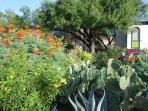 GARDEN IN FRONT OF TOWNHOME