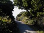 Beautiful canopy of nature surrounding an easy paved beach path just two hundred steps to the sand.