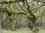 Direct access from property to one of our trails into the centuries old oak wood