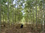 New forestry project undertaken in recent years